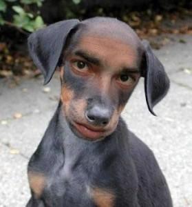 Kadınlar erkek yerine köpek mi tercih ediyor?