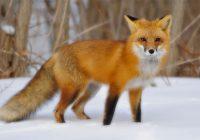 Namaz Kılmayan Hayvanlar Hangileri