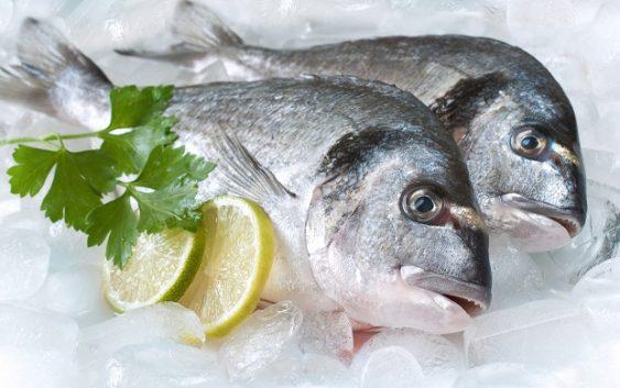 Balık Seçimi ve Dikkat Edilmesi Gerekenler ?